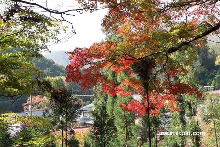 大徳寺讃州寺の紅葉(2018年11月10日撮影)