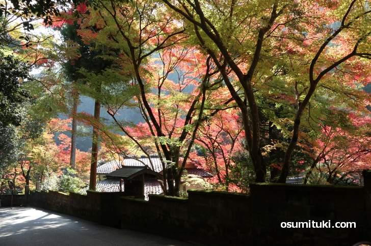 京都・鷹峯「吟松寺」の紅葉は見頃で、もう少しで全体が紅くなりそう(2018年11月10日撮影)