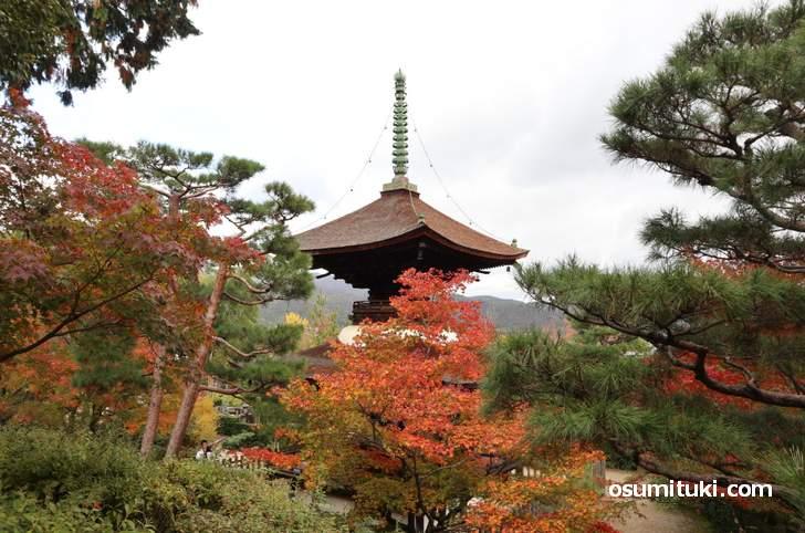 常寂光寺には紅葉がたくさん植えられています(2018年11月14日)