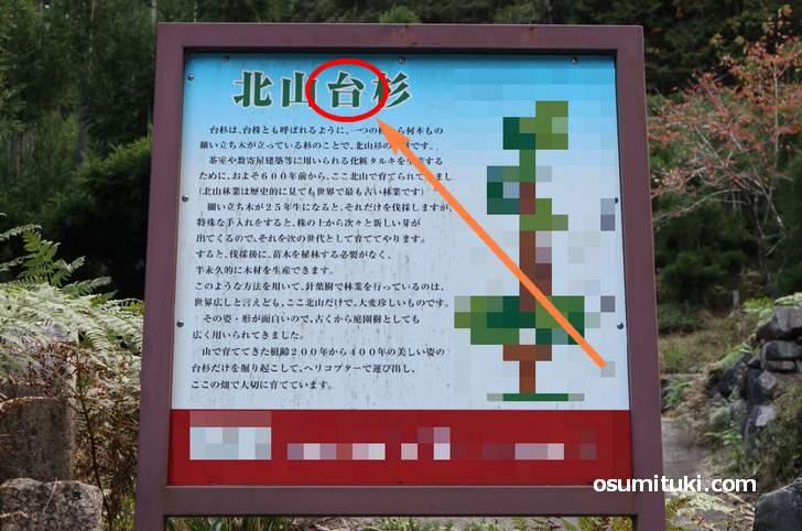 北山台杉?
