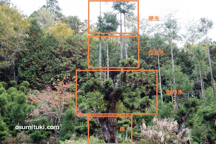 北山台杉は4つの構造になっています