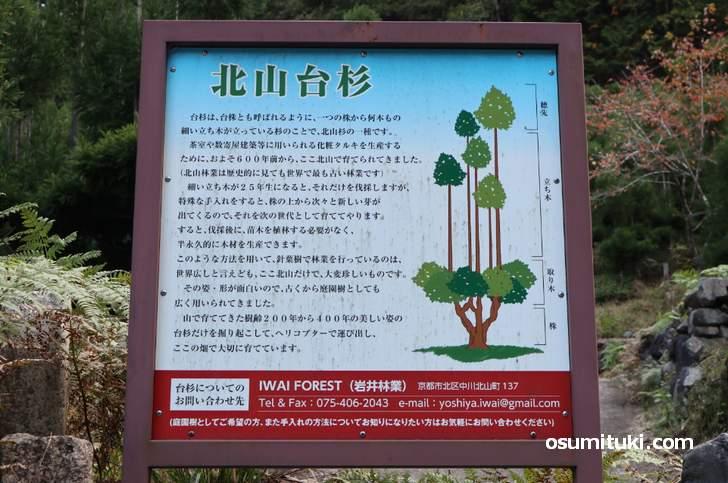 岩井林業が保存している北山台杉を見ることができます(杉坂口)