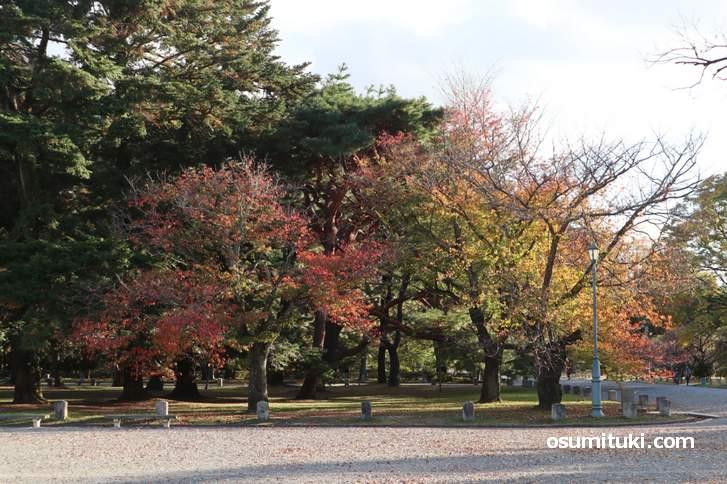 2018年11月15日に見た「京都御苑の紅葉」具合