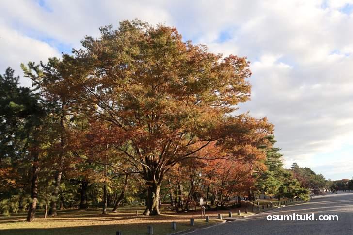学習院発祥の地の紅葉(2018年11月15日撮影)