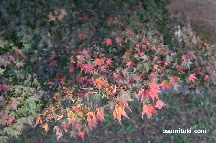 2018年 京都の紅葉はだいたいこんな感じ