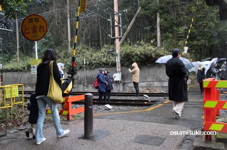野宮神社前の踏切で線路内に立ち入って記念撮影する中国人観光客(2017年撮影)