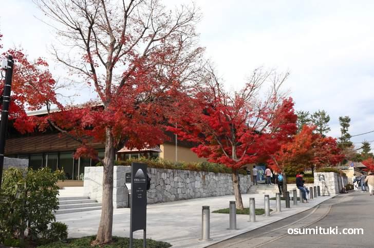 嵯峨嵐山文華館の紅葉が一番真っ赤でした(2018年11月25日)