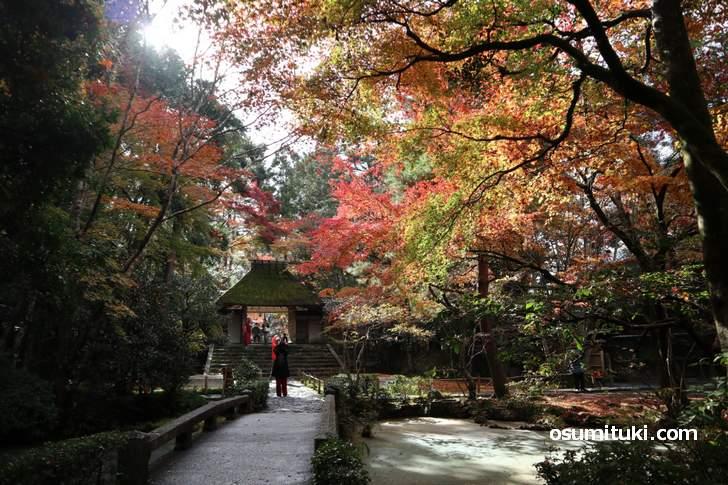 幻想的な雰囲気の銀閣寺エリアの紅葉(写真は法然院)