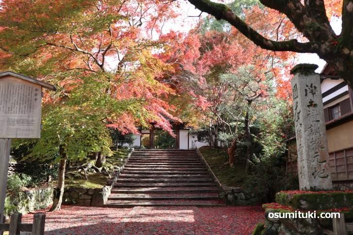 入口で満足できるほどスゴイ!安楽寺(あんらくじ)の紅葉