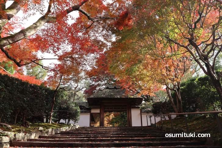 安楽寺の紅葉が見事でした(山門の先は有料500円)