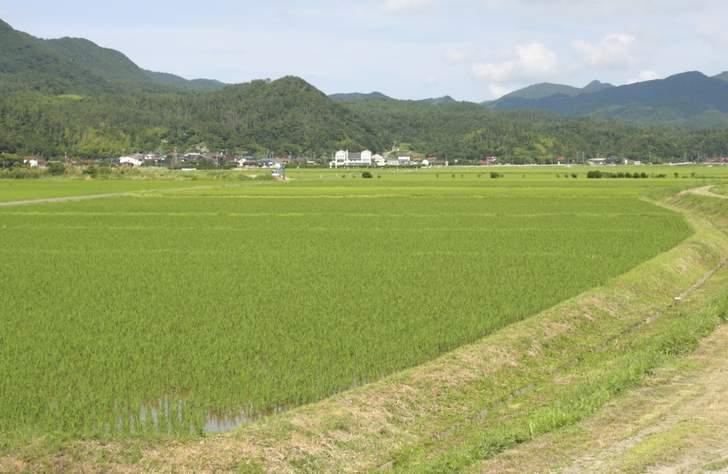 島根県の良質な水と寒暖差で美味しく育つ米