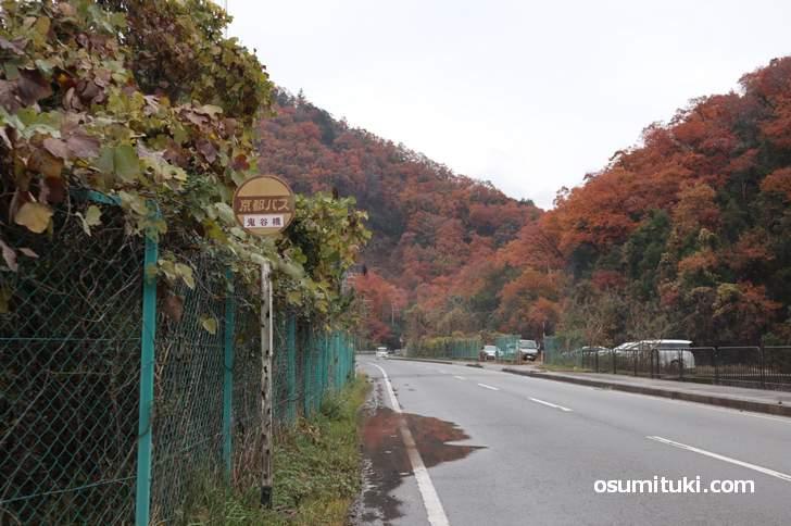 京都バス55系統「鬼谷橋バス停」