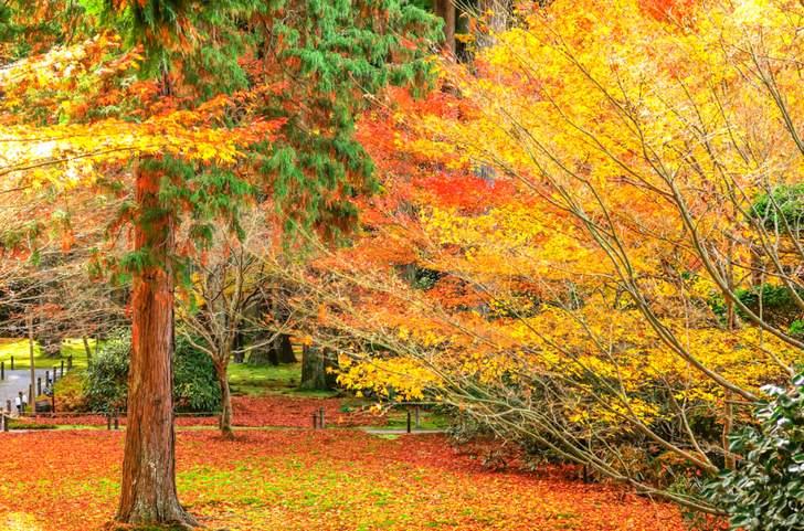 大原三千院の紅葉は東洋の宝石箱と言われています