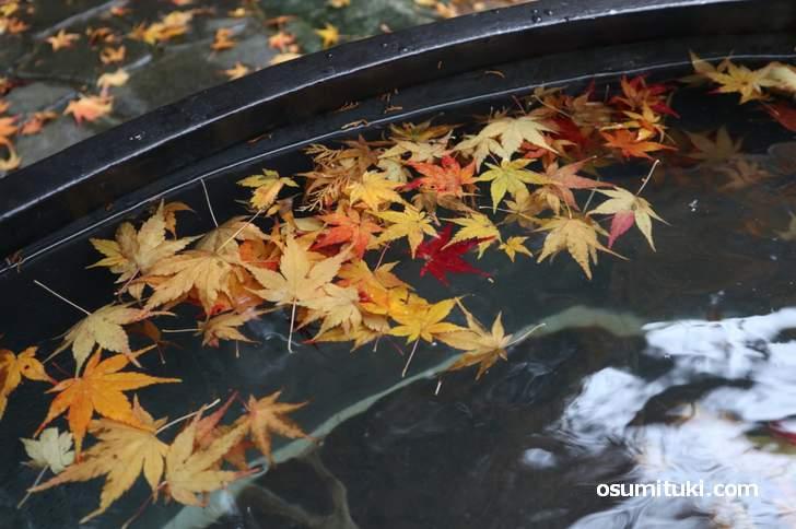 紅葉の五右衛門風呂が京都の大原にありました