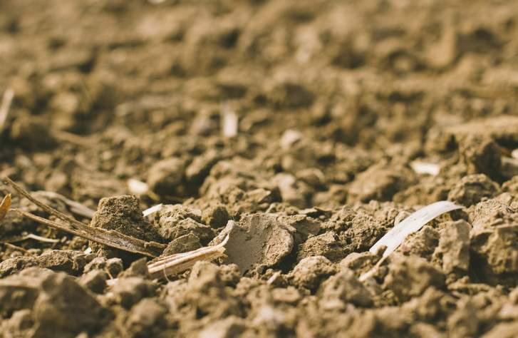 微生物と共存した土づくりから始めている「コッコパラダイス」は無農薬・無化学肥料