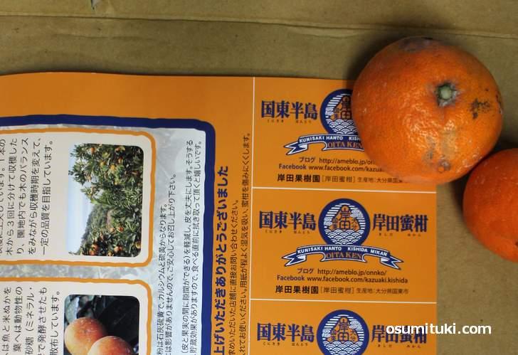 京都にしか出荷されない蜜柑「国東(くにさき)の岸田」