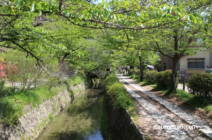 京都で住宅地といえば「銀閣寺エリア」です(写真は哲学の道)