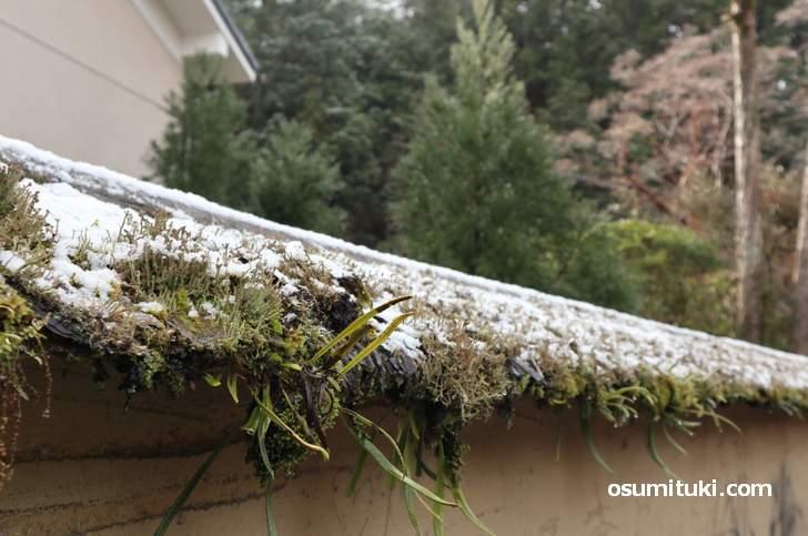 2019年1月9日に京都市内でも本格的に雪が降りました