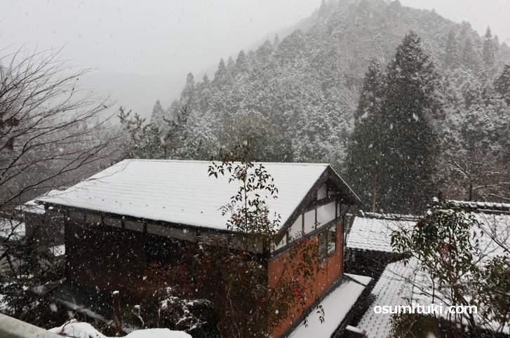 京都市北区雲ケ畑の雪景色(2019年1月9日10時30分)