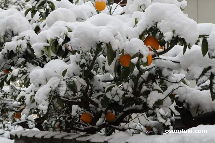 お墨付き!(osumituki.com)では京都の降雪記録を行っています