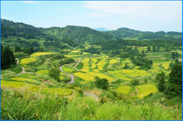新潟県松代町(まつだいまち)は棚田が広がるお米の産地です
