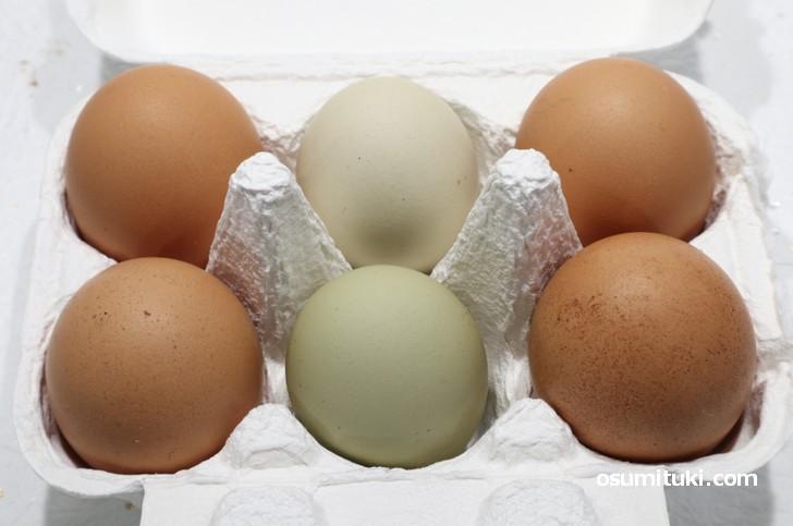 こだわりすぎた卵「清阪terrace の自然卵」