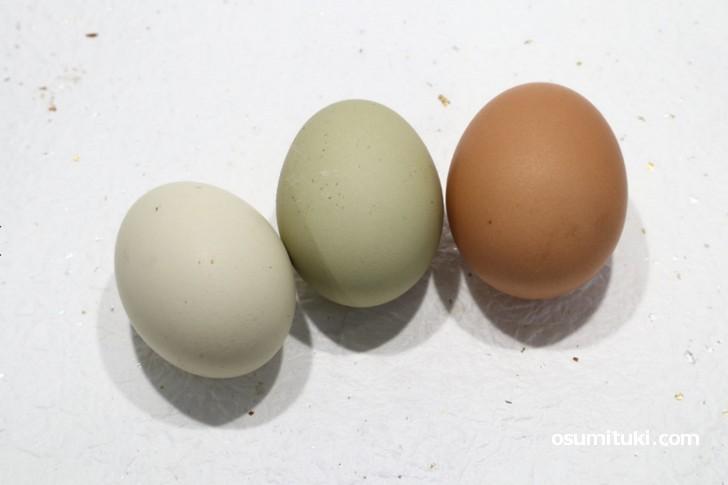 緑の卵を産む純国産鶏「アロウカナ」の卵も含まれています(清阪terrace 平飼い自然卵)