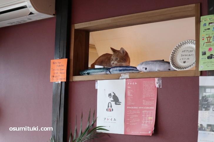 壁際には猫が、お隣は同じ経営の猫カフェです
