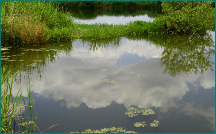 大阪では池の中に住宅街があるらしい・・・・