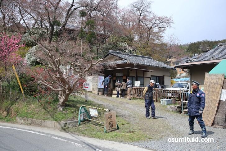 京都「原谷苑」桜の開花状況(2019年4月1日)