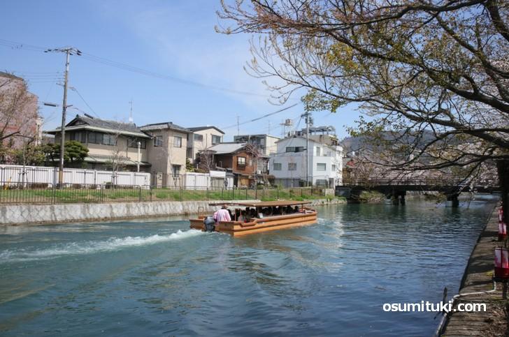 遊覧船で桜を見ることもできます(1200円)
