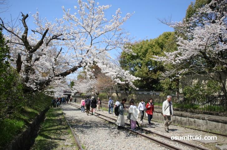 観光客が多く、人気の桜スポットです