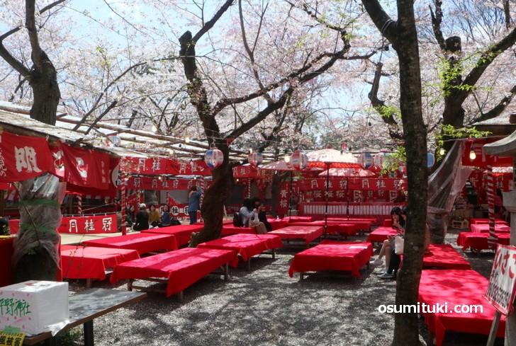 平野神社名物「桜の屋台」