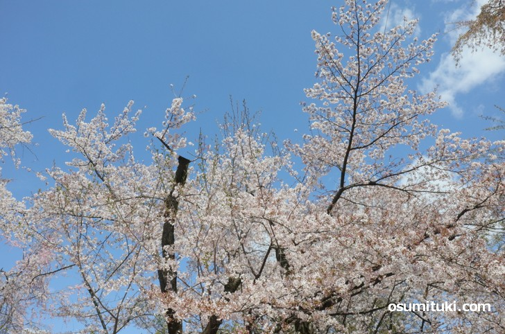 桜の庭はどこが入口なのか分からない