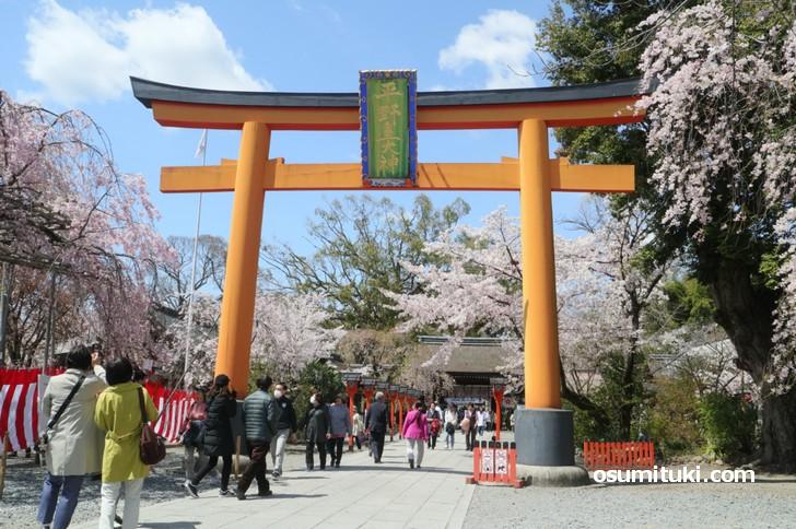 平野神社へ行くなら京都市バスが便利です