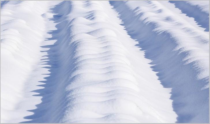野菜(根菜など)は雪の下で保存すると凍らないように自ら不凍液を出します