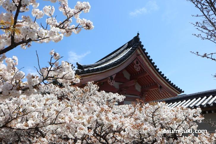 入口付近の方が桜が満開です