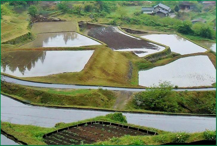 水田に水をたたえた坂折棚田、この水源である森林を守る活動をしているのが木こり集団「杣組(そまぐみ)」