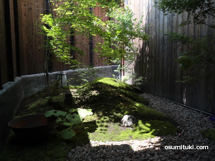 京町家といえば「坪庭」イイ雰囲気ですねぇ~