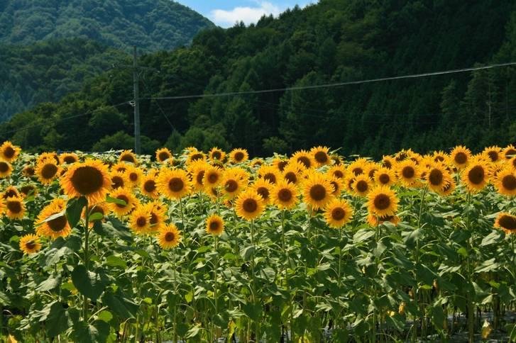新緑豊かな長野県平谷村、そこでカフェを営む岡田能典さんご夫婦が『人生の楽園』で紹介