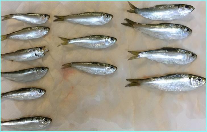 有明海の竹崎コハダが『満天青空レストラン』で紹介されます