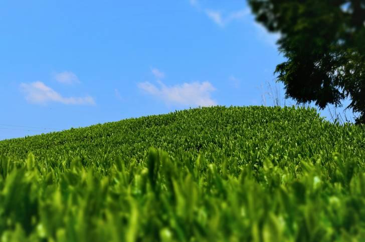 2001年に茶畑、2015年6月には茶摘み体験ができる農家民宿「ぬくもり園ゆるり」を開業