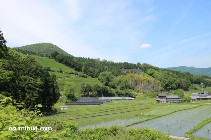 広大な茶畑が延々と続く和束の町並み