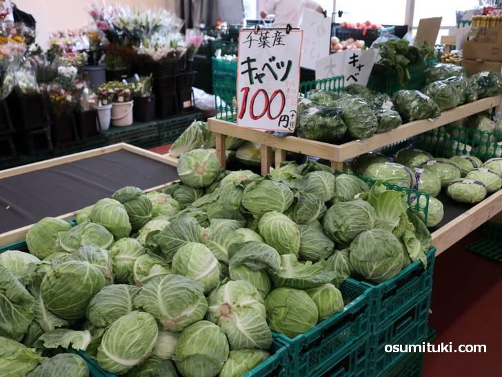 千葉県のキャベツは100円(旬の駅 京都店)