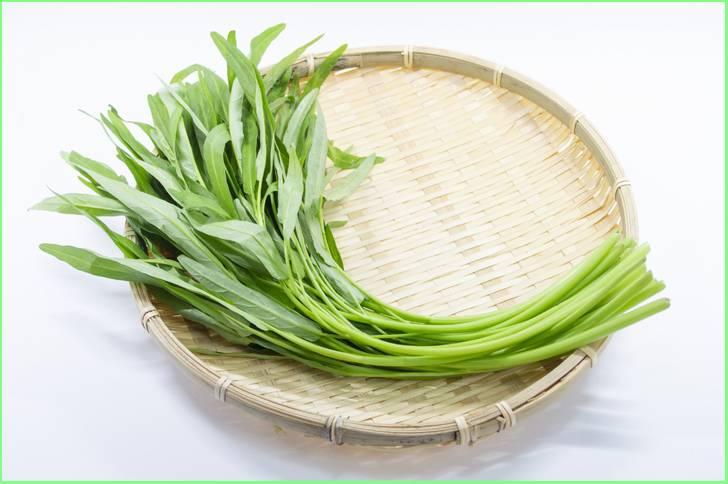 若い葉だとなんか雑草みたいですが栄養価の高い野菜としても知られています(空芯菜)