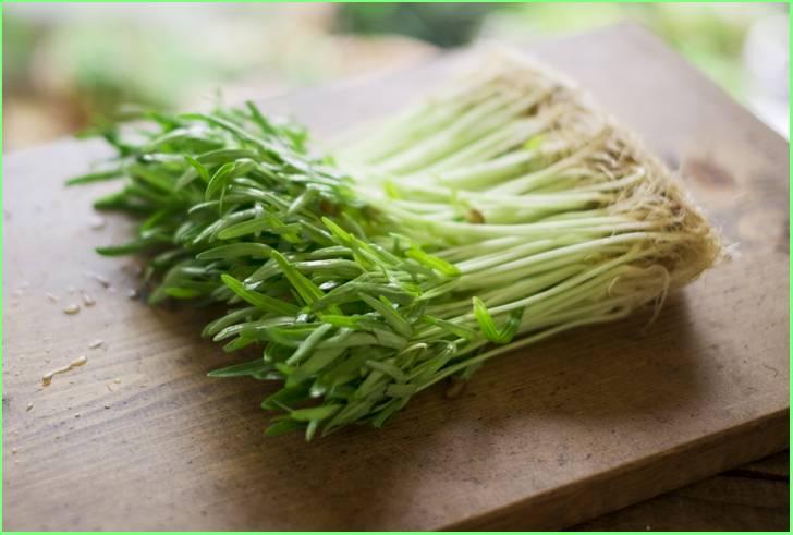 空芯菜はスーパーマーケットなどで売られています