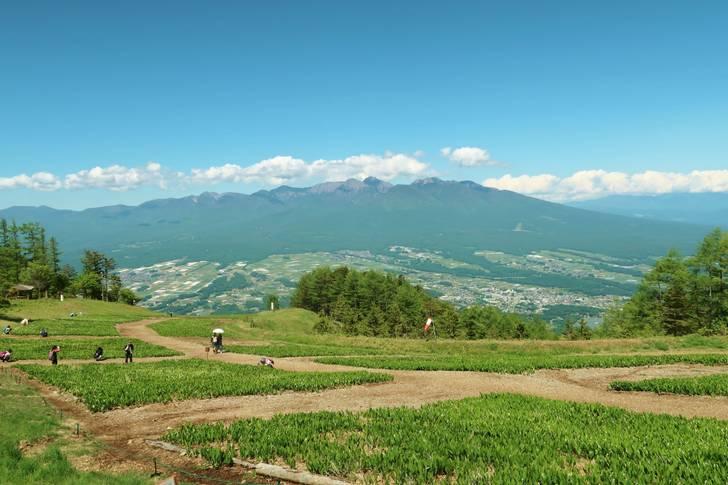 入笠すずらん山野草公園から見た八ヶ岳と富士見高原