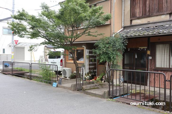 お店の前には樹齢70年の紅葉があります(yoo cafe)