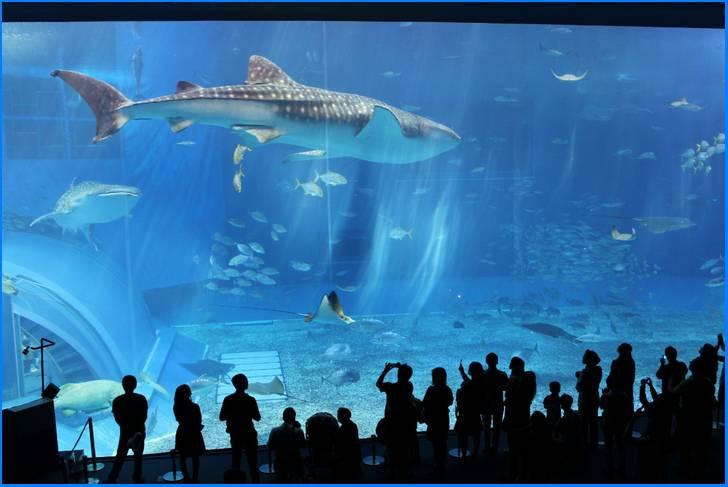 巨大なアクリルパネルの水族館「美ら海水族館」がすぐ近く