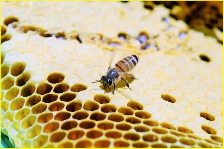 ミツバチの個体数が激減しており、国内蜂蜜は高価なものになっています